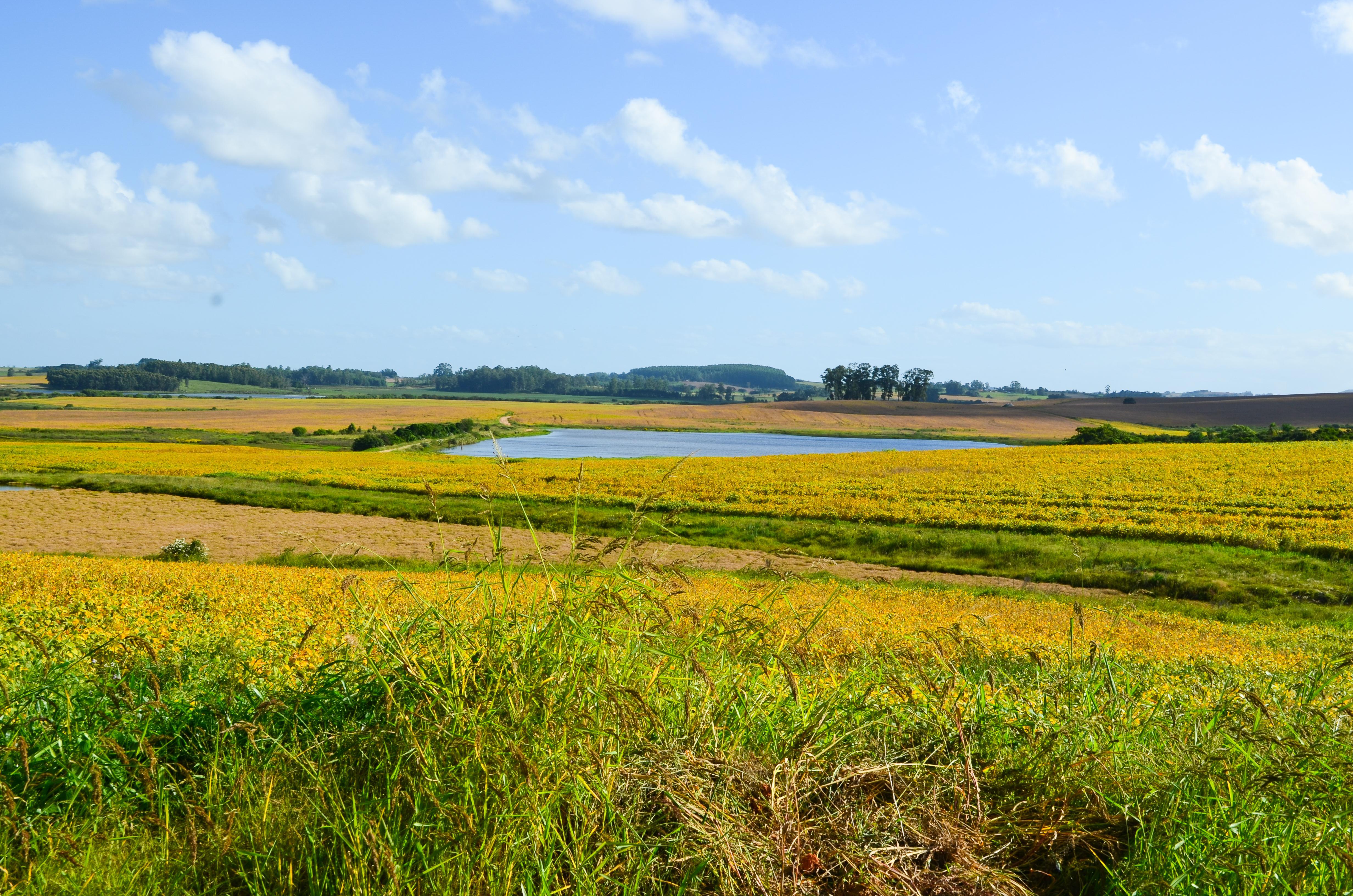 Uma correta avaliação do seu imóvel rural agiliza a negociação